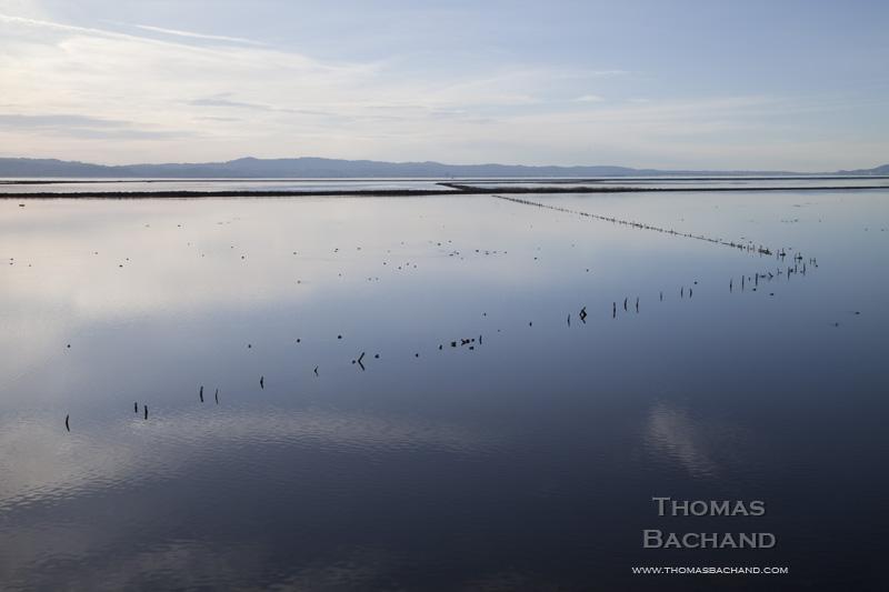Recovered salt pond. San Francisco Bay.