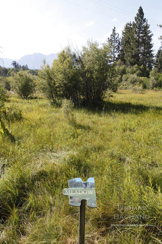 Meadow.  Taylor Creek.  South Lake Tahoe, California.