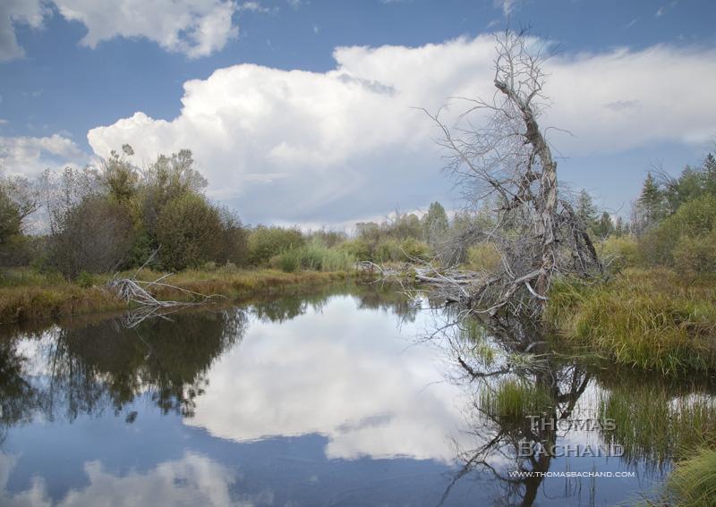 Taylor Creek watershed.  Dead snag.  South Lake Tahoe, California.