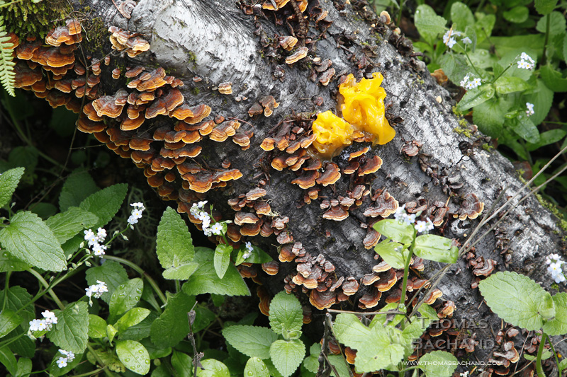 Fungus and Flowers. Point Reyes National Seashore. California.
