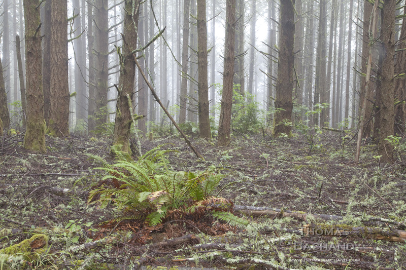 Fern and Forest Debris. Point Reyes National Seashore. California.