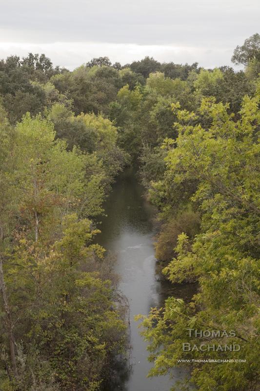 Putah Creek in the rain. Davis, California.