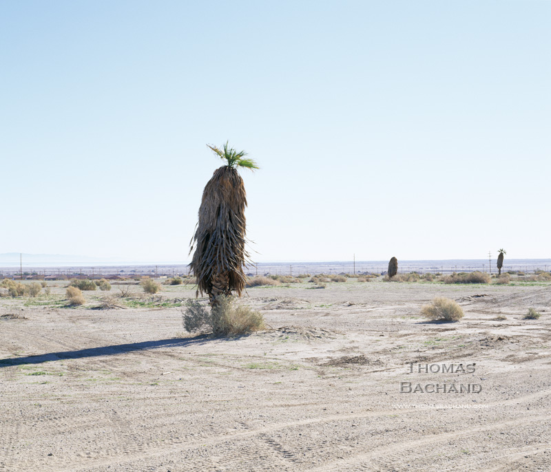 Lone Palm. Salton Sea, California.