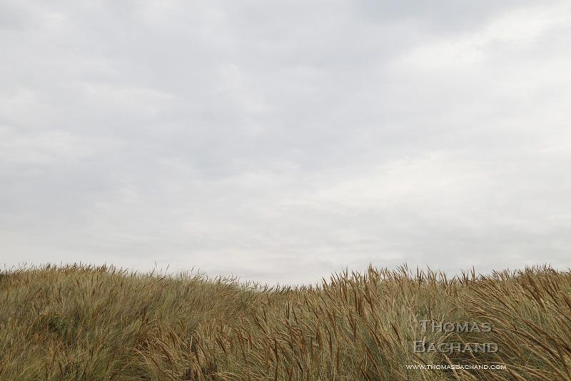 Grasses. Manchester State Park.