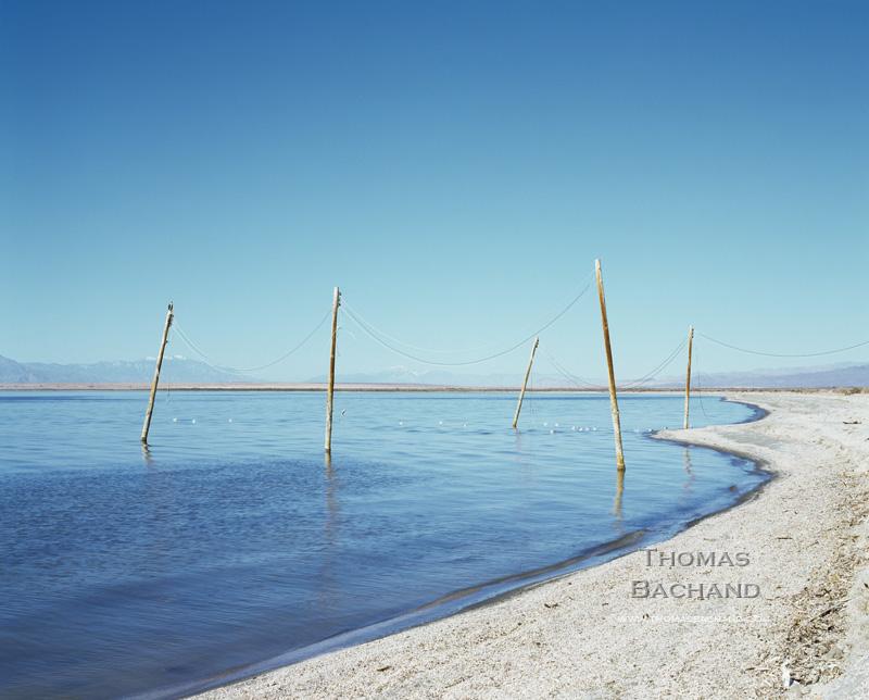 Hawk on Electrical Poles in Water. Salton Sea, California.
