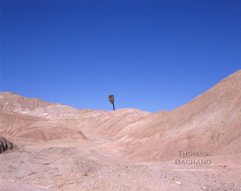 Una Palma.  Anza Borrego State Park.