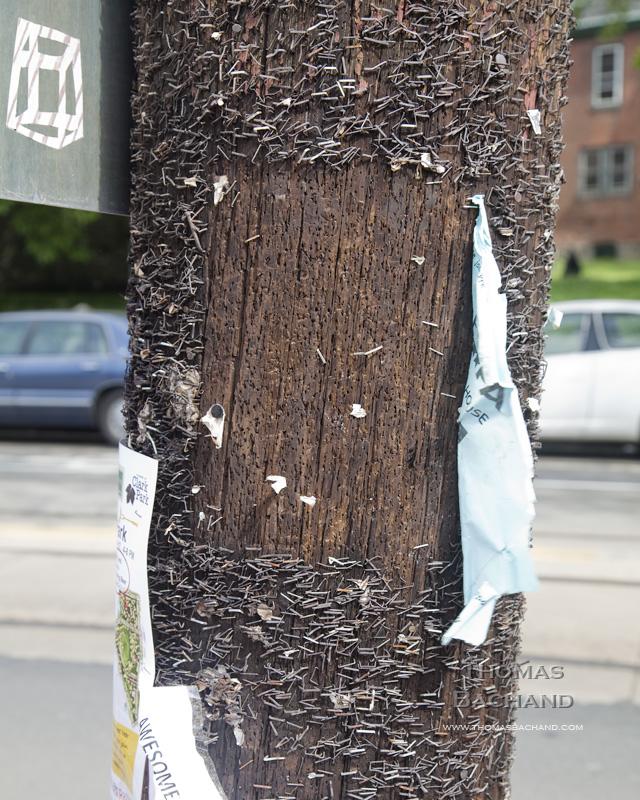 Staple pattern on telephone pole. Philadelphia.